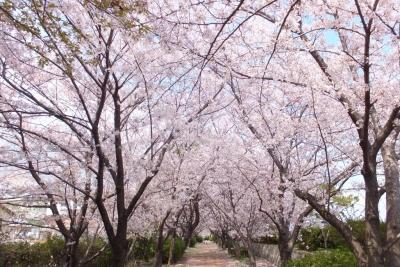 140405武庫川河川敷①