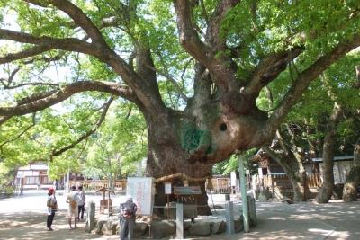 140531④大麻比古神社(大楠)