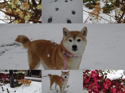2月14日 雪2