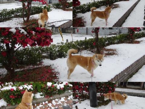 2月14日 雪3
