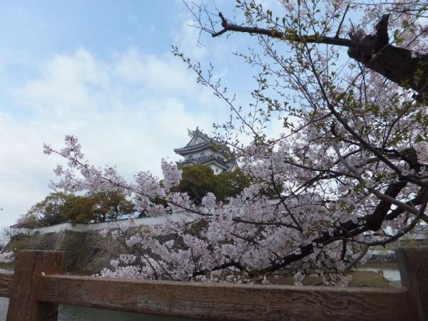 KishiwadajoSakura_001_org.jpg