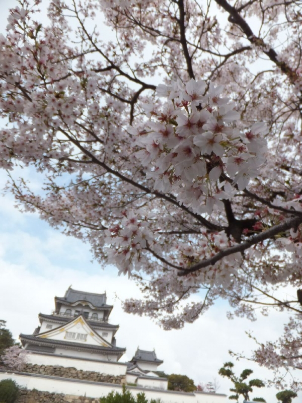 KishiwadajoSakura_003_org.jpg