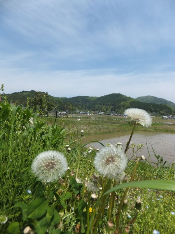 NoseMikusayama_001_org.jpg