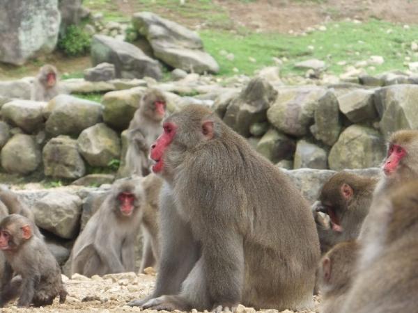 ShodoshimaChoshikei_006_org.jpg