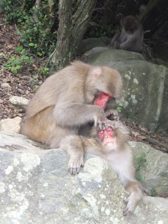 ShodoshimaChoshikei_007_org.jpg