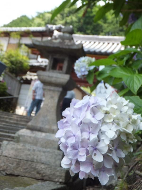 YataderaAjisai_001_org.jpg