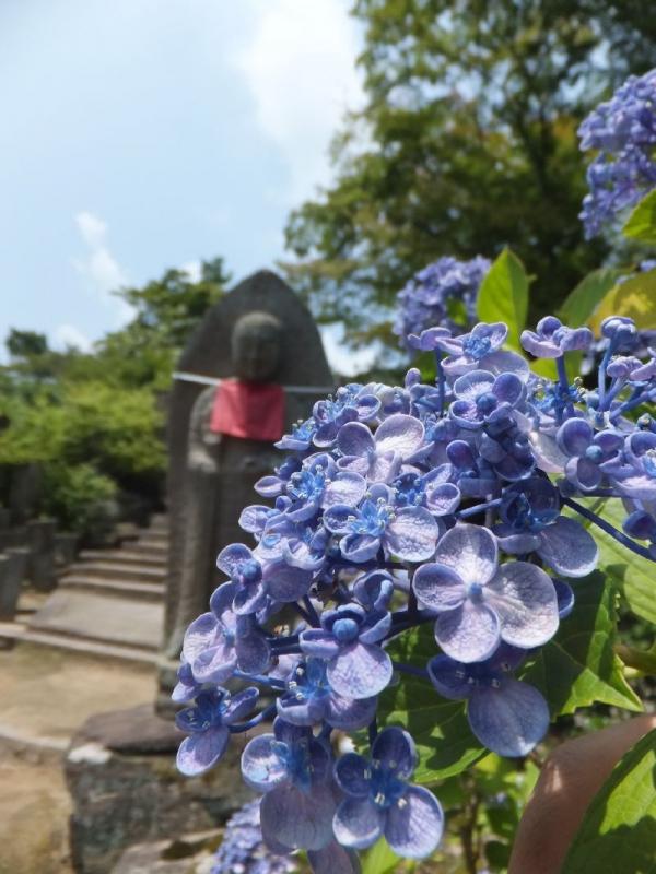 YataderaAjisai_002_org.jpg