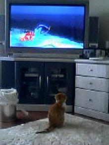 テレビちゃあちゃん