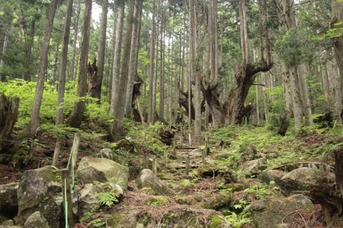 21世紀の森公園内部