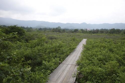 ひるがの湿原植物園湿原
