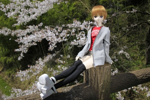 桜と共に3