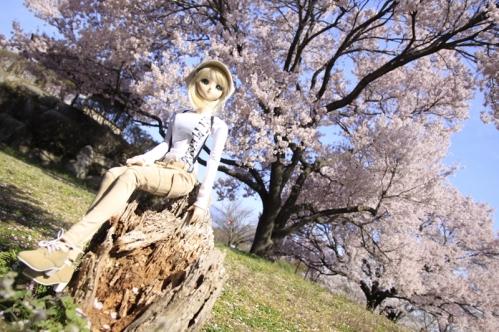 桜の木の下で7