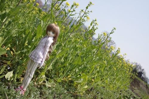 菜の花畑で3
