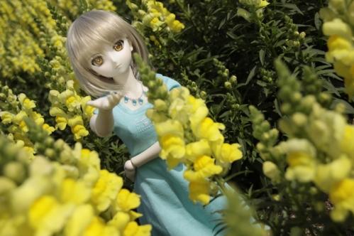 黄色い花と2