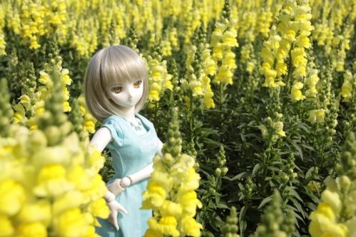 黄色い花と3
