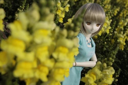 黄色い花と4