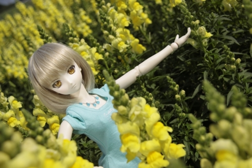 黄色い花と5