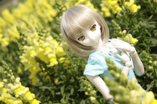 黄色い花と7