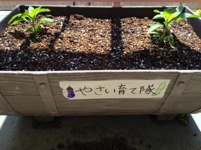 野菜ブログ3