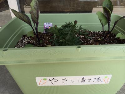 野菜ブログ1
