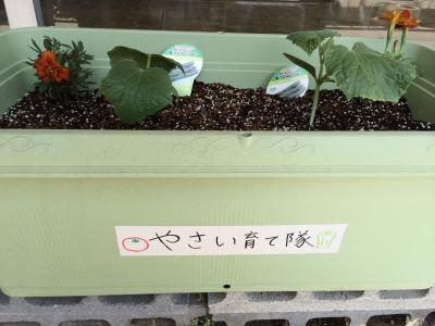 野菜ブログ2