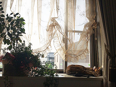 窓辺の定位置