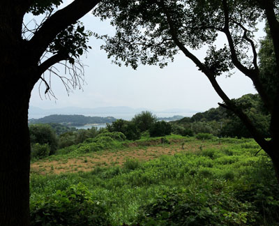 オリーブ園から海が見える