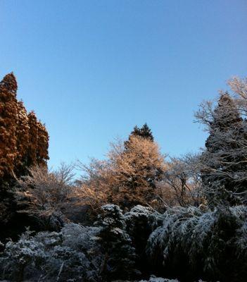 別府の雪1