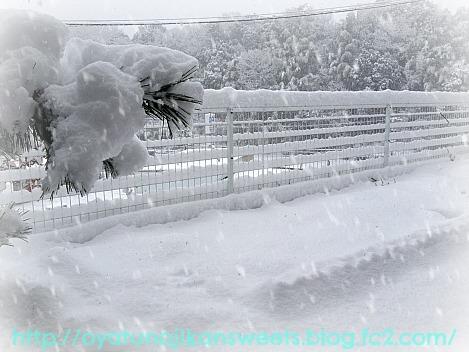 雪2IMG_2459[1]