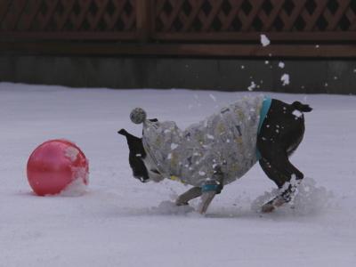 雪だってボールの誘惑には・・・