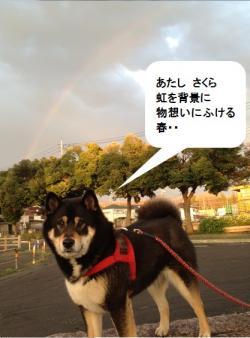20140403さくら_convert_20140404235125