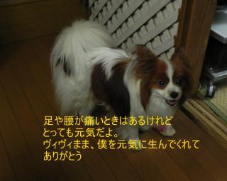 levin10yearsold_convert_20140427005416.jpg