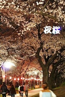 夜桜♪散歩♪