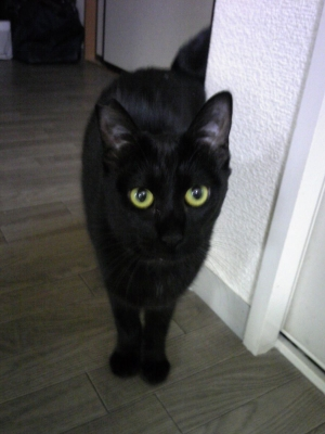 黒猫のタンゴ2