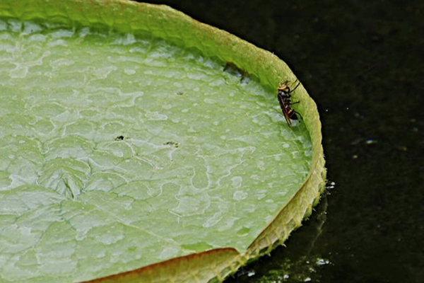 虫たちのパラダイス 横2