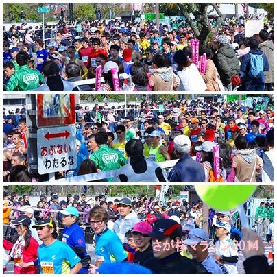 桜マラソン2014
