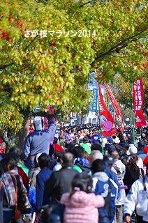 さが桜マラソン2014 (4)