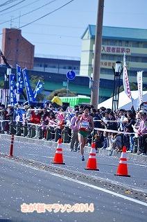 さが桜マラソン2014 (16)