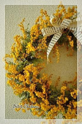 mimosa&libbon (2)