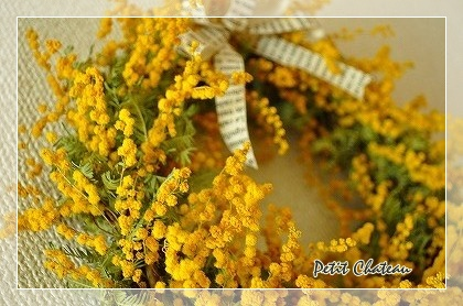 mimosa&libbon