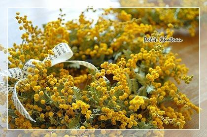 mimosairoiro (6)