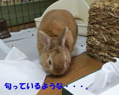 pig 20140730