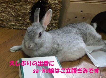 sa-ko 20140826
