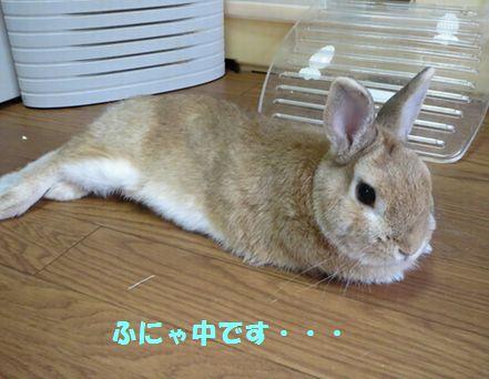 pig 20140827