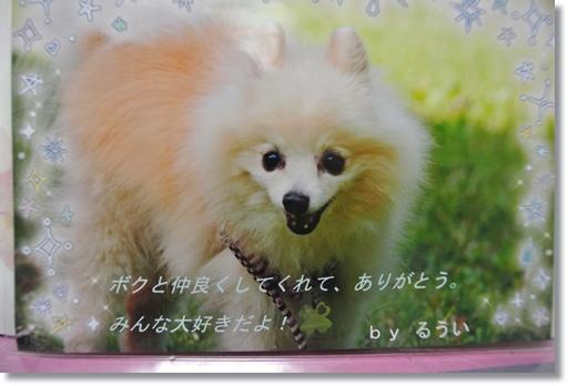 009a_2014030208014545f.jpg