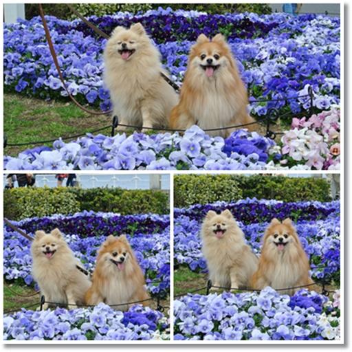 cats4_20140330234530082.jpg