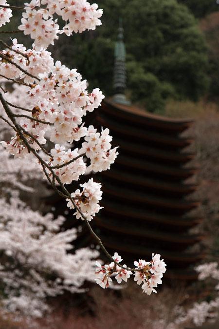談山神社 神幸祭5