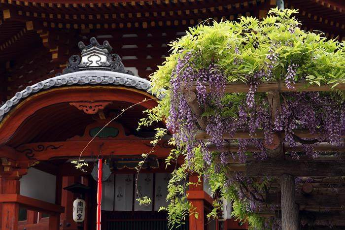 興福寺 フジ1