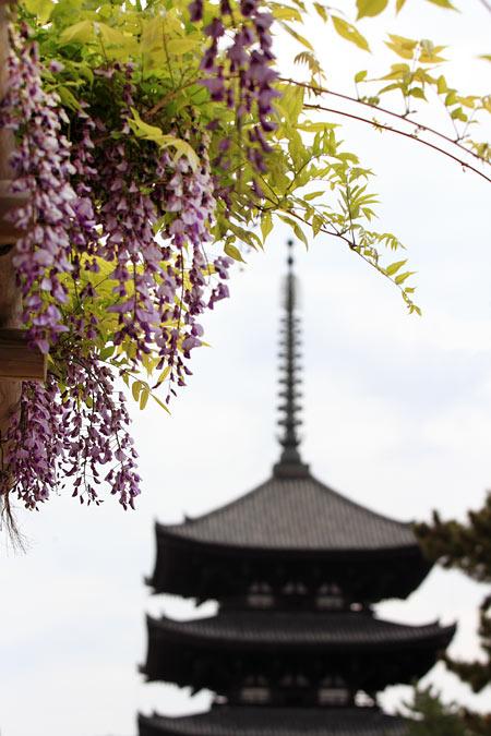 興福寺 フジ2