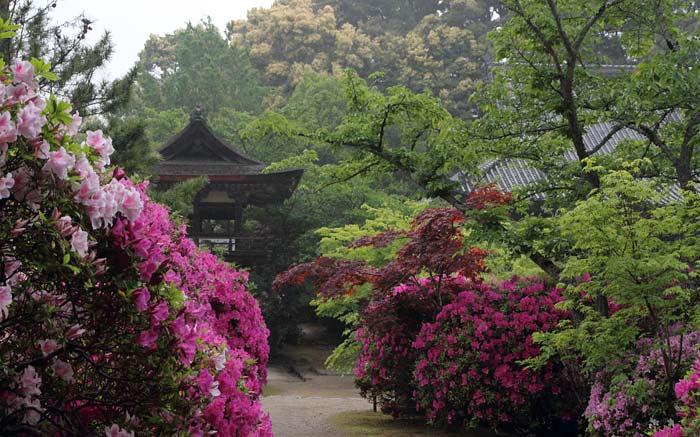 長岳寺 ツツジ・カキツバタ2